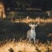 里奇蒙公園 Richmond Park 倫敦的小非洲草原
