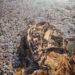 久德浦 太陽堡壘下的一抹淺藍 Jodhpur